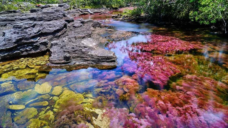 Caño Cristales Meta - Viajes a Colombia - ColombiaTours.Travel