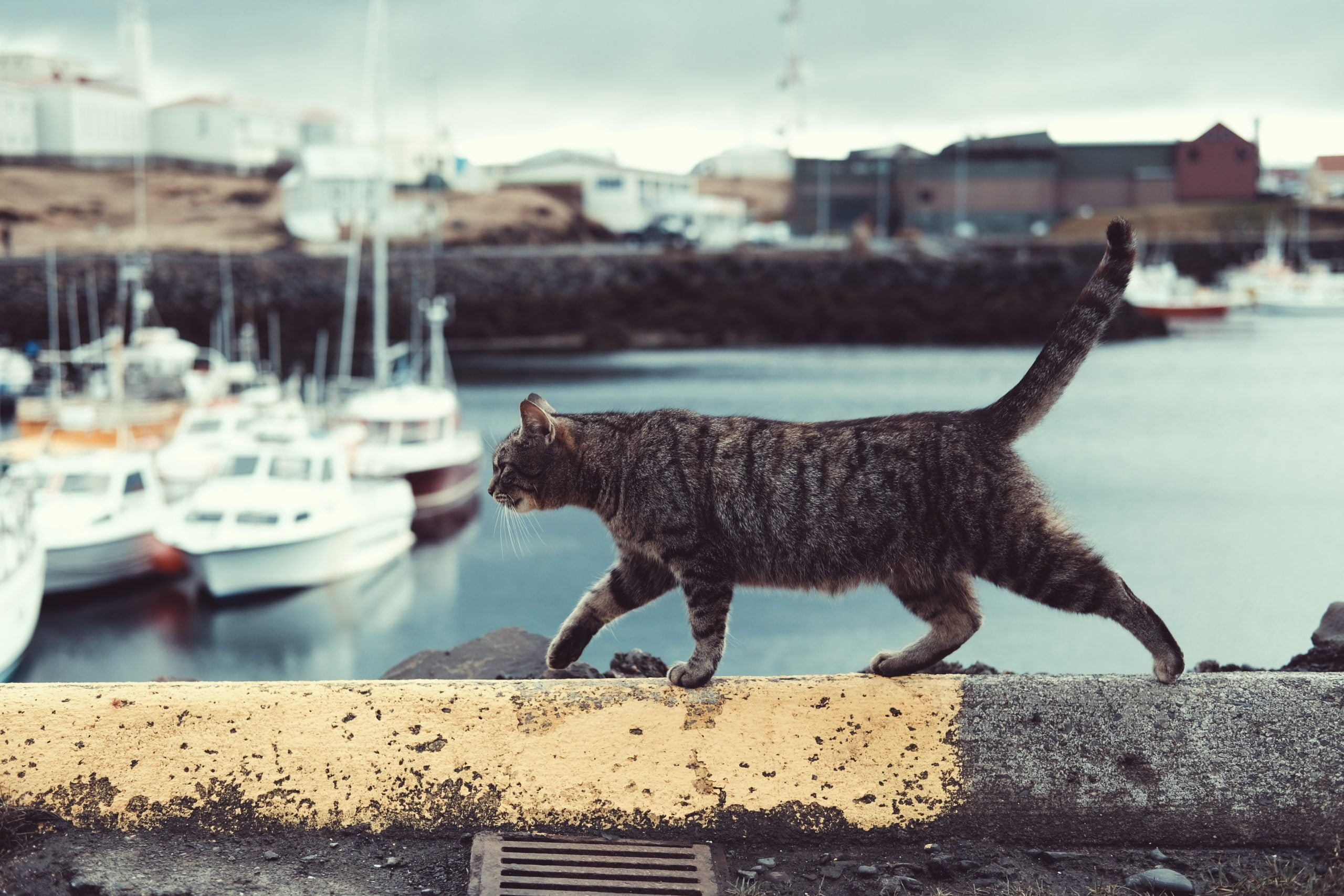 cómo viajar con tu gato - Consejos Prácticos - Viajes Colombia ColombiaTours.Travel