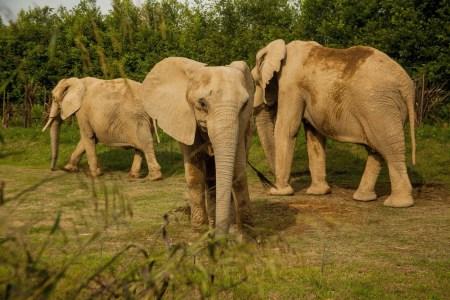 Elefante - BioParque Ukumarí - Planea tu viaje a Colombia con ColombiaTours.Travel
