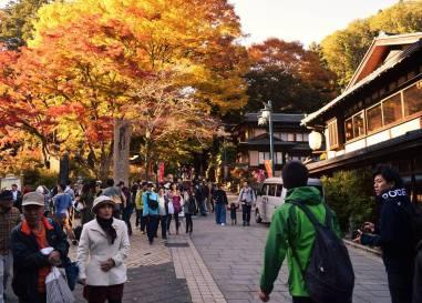 Fall colours - Mount Takao