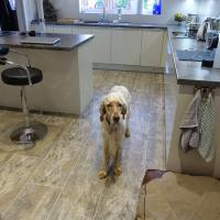 Pet-friendly flooring from Polyflor at Home