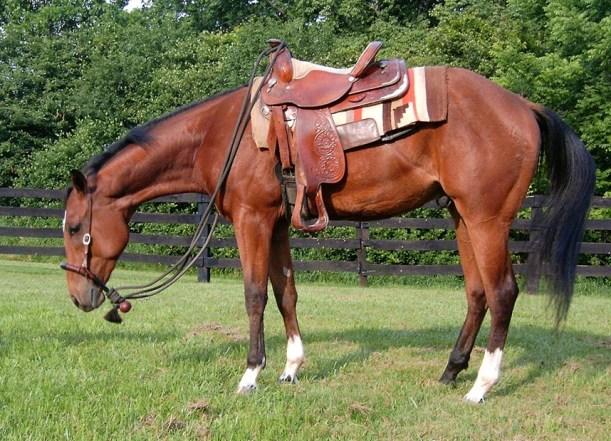 nathaniels horse charlie