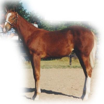 nathaniels horse gem