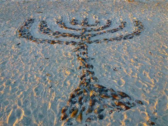 seashell-menorah-beach-2