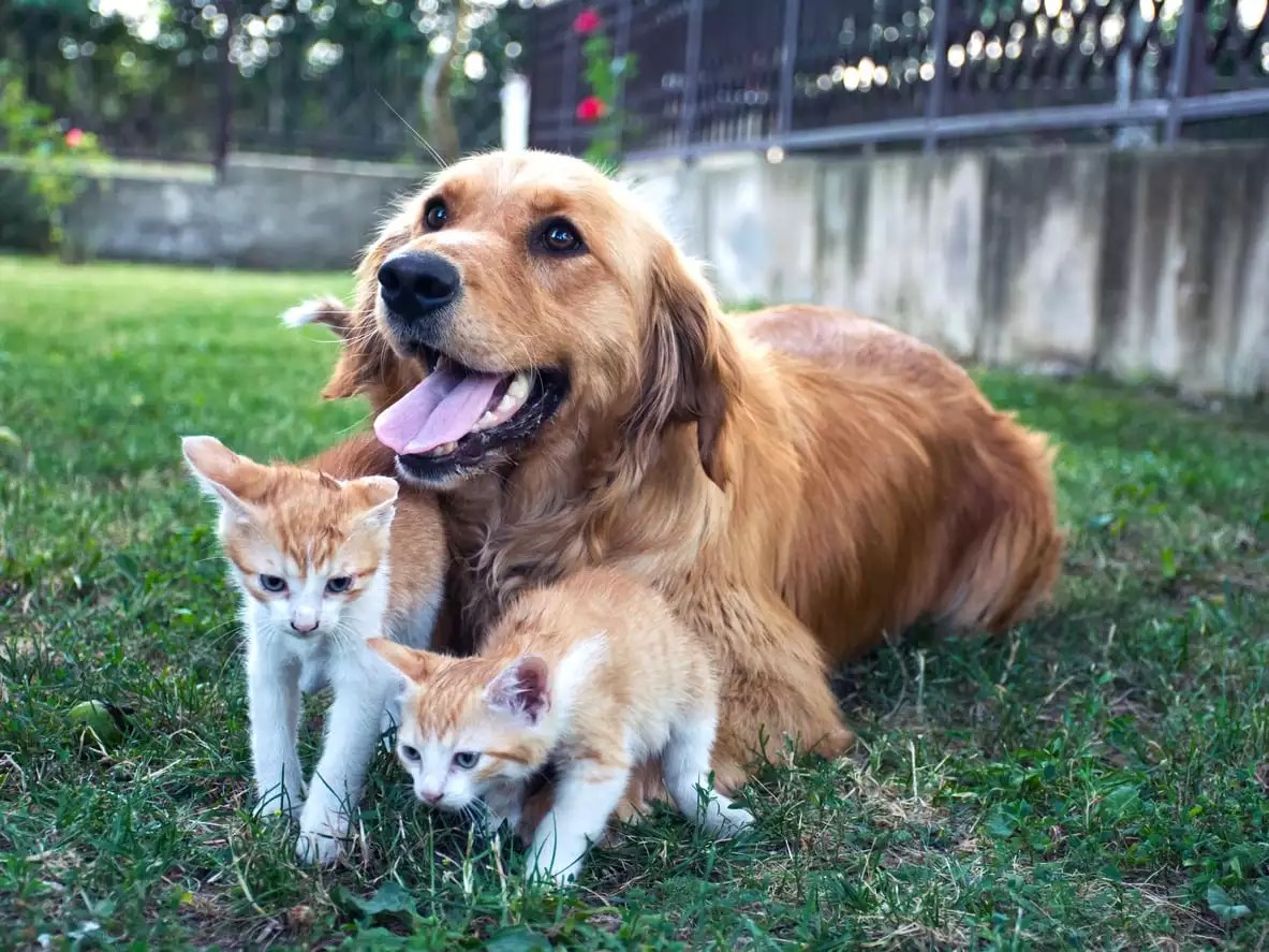Puppy And Kitten Care In Newport News