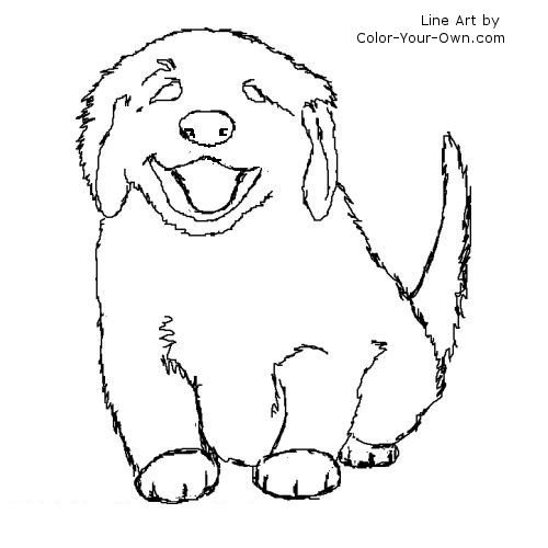 golden retriever coloring pages  coloring pages gallery