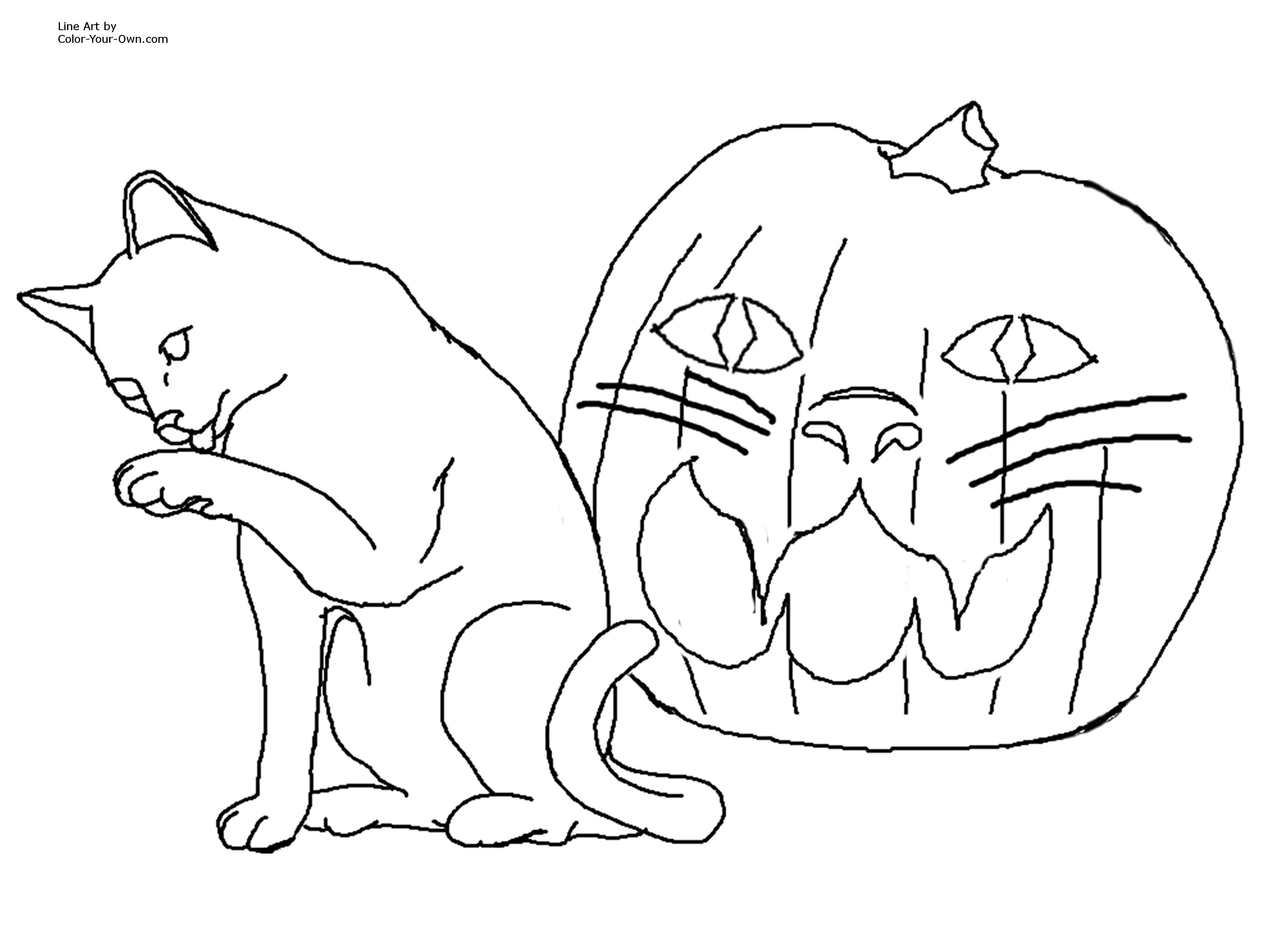 Halloween Cat Jack O Lantern Coloring Page
