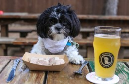 Dog Bars in Denver