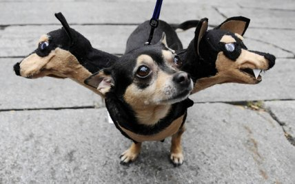 Just A Bunch Of Puppy Halloween Costumes Ocn Colorado