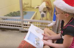 shelter buddies reading program