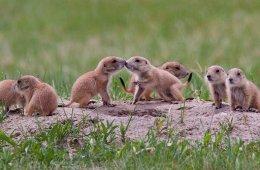 Prairie Dog Policy