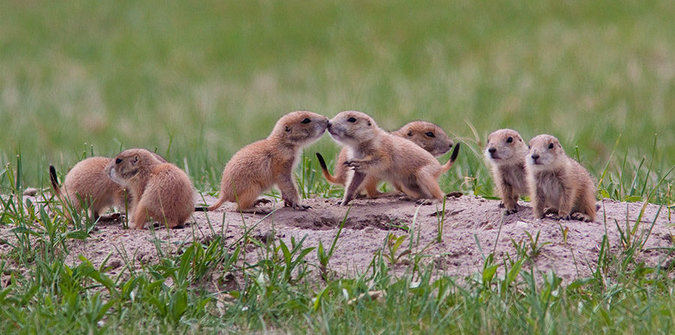 Prairie Dog Policy