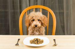 top pet foods