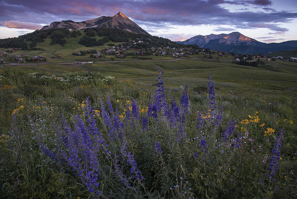 wildflower festival in crested butte, colorado