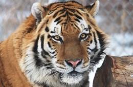 denver zoo yuri