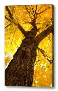 Climb-To-Gold-Canvas-Art-Print