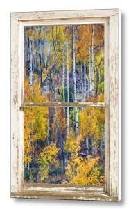 Aspen-Tree-Cottonwood-Pass-White-Farm-House-Window-Canvas-Art-Print