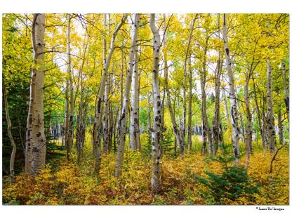 "Colorado Backcountry Forest 32""x48""x1.25"" Premium Canvas Gallery Wrap"