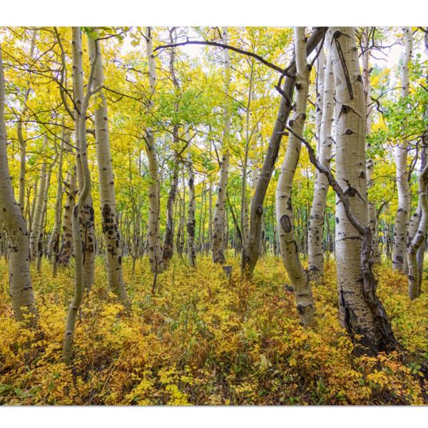 Colorado nature landscape canvas art