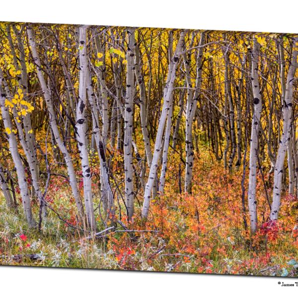 """Wonderful Autumn Forest Wonderland 32""""x48""""x1.25"""" Premium Canvas Gallery Wrap Art"""