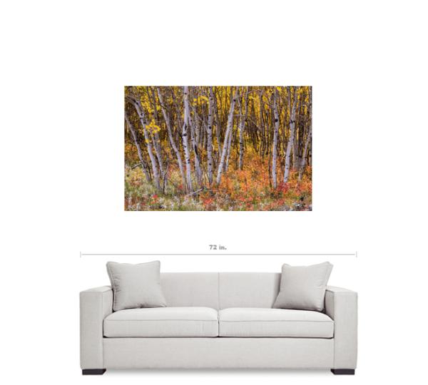 """Wonderful Autumn Forest Wonderland 32""""x48""""x1.25"""" Premium Canvas Gallery Wrap"""