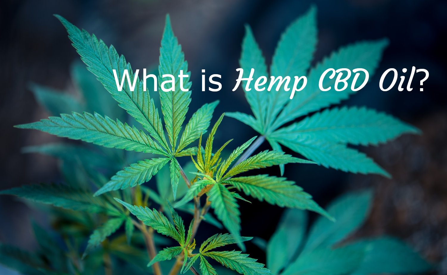 What is hemp CBD Oil