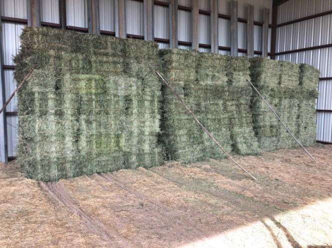 hay in barn 2 6-19