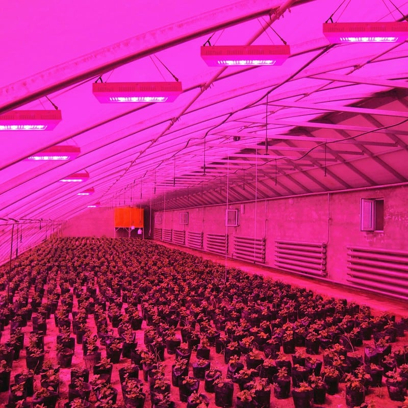 led grow lights