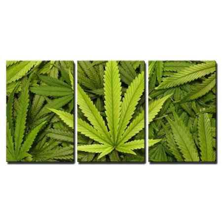 cannabis themed wall art
