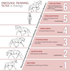 Impulsion - Training Scale