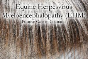 EHV - Equine HerpesVirus