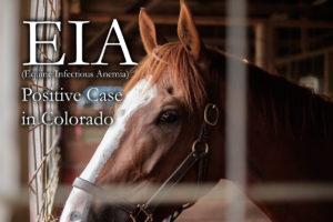 EIA Positive Horse in Colorado