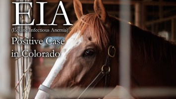 EIA Positive Horse in Colorado