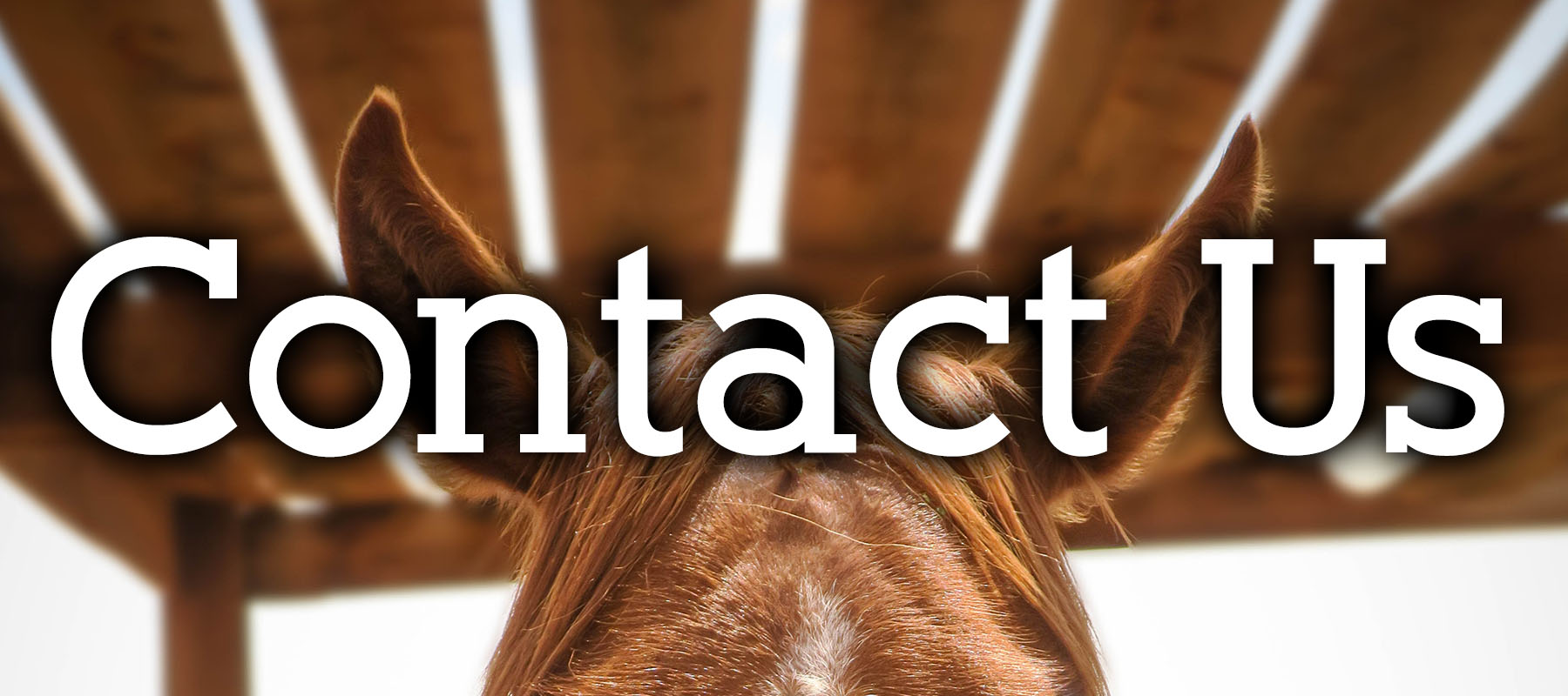 Contact the Colorado Horse Forum