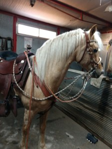 Two-rein, Bit & Bosal Clinic @ Douglas County Fairgrounds |  |  |