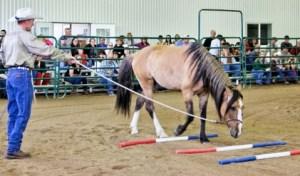 Harmony Horse Expo @ Dumb Friends League Harmony Equine Center |  |  |