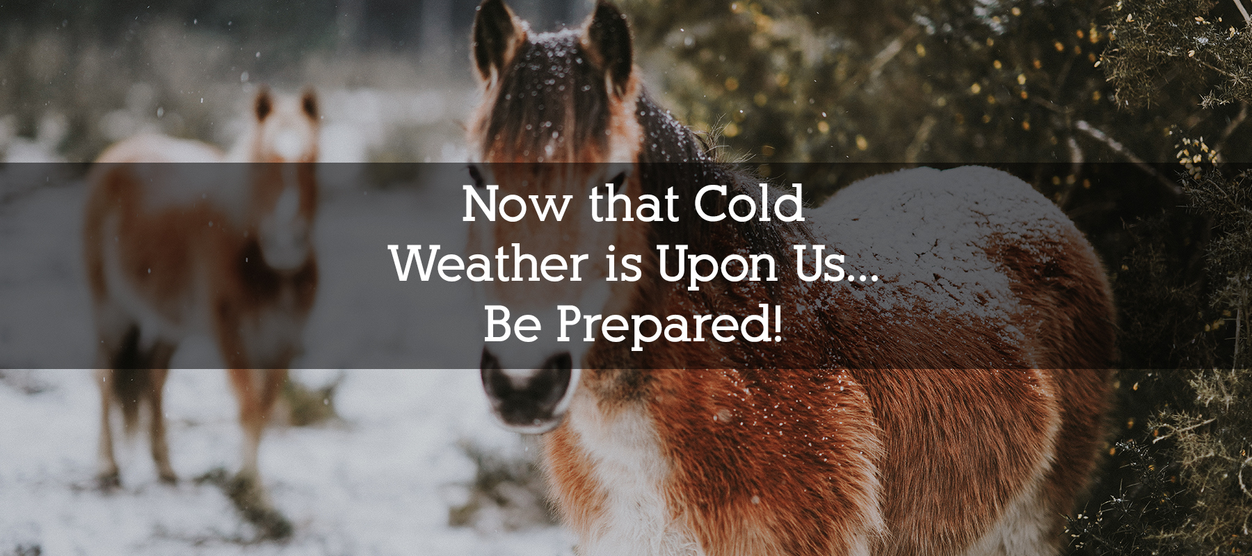 Cold Weather and Winter Tips for your Horse in Colorado