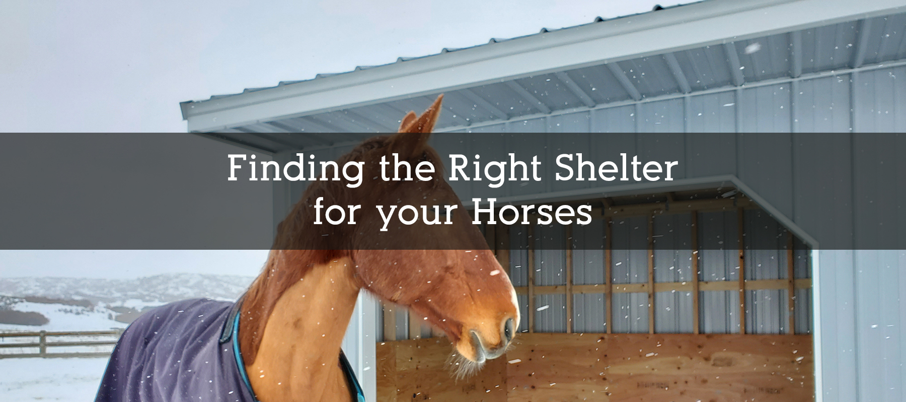 Finding the Right Shelter for your Horse