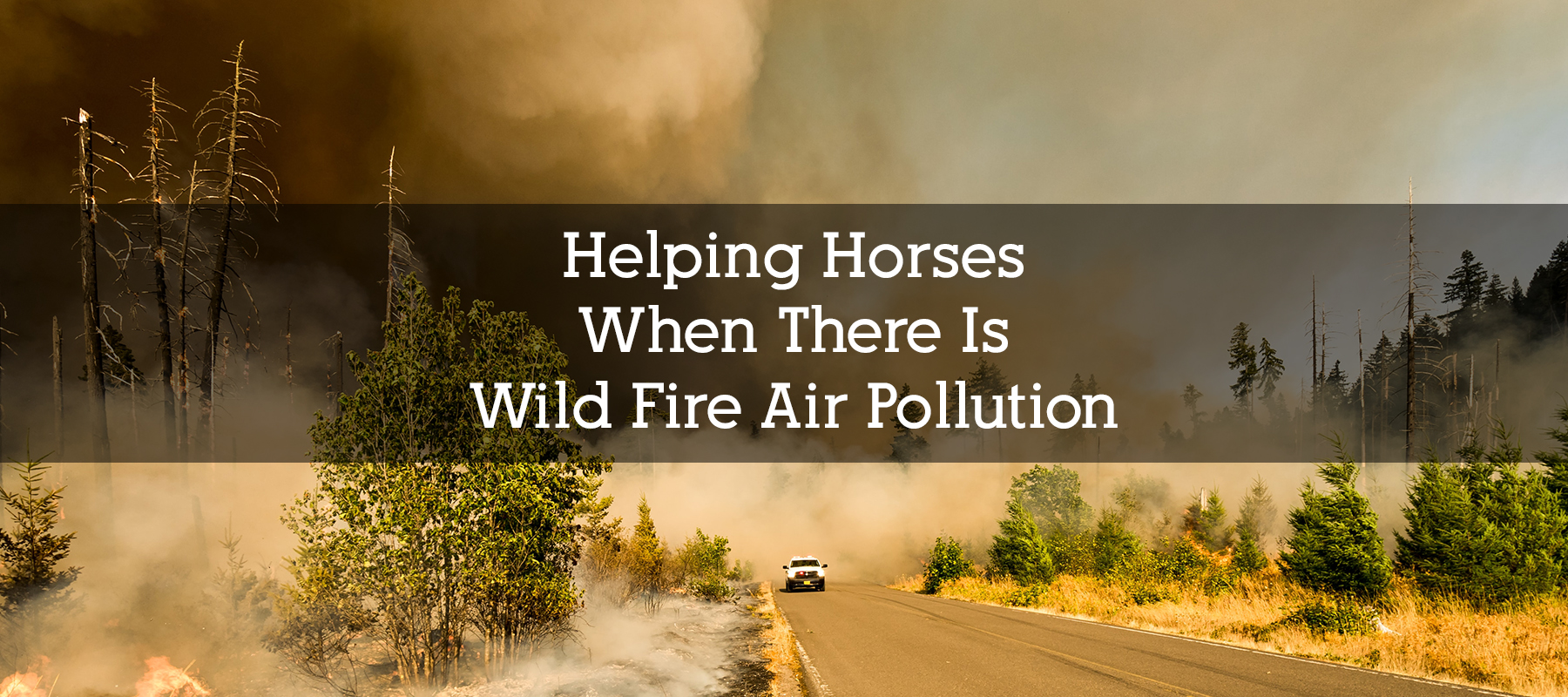 Helping Horsees with Wild Fire Air Pollution and Smoke