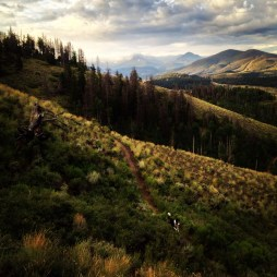 Many of my photo shoots are combined with the obligatory morning dog-walk. Sometimes one of our pups gets into the frame I'm carefully composing. Sometimes it works, sometimes it doesn't. Aug. 1, 2014, Tenderfoot Trail, Dillon, Colorado.