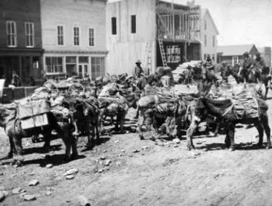 Leadville pack train. Dirt street is busy with with men on horseback and hairy burros loaded with goods, 1880s.