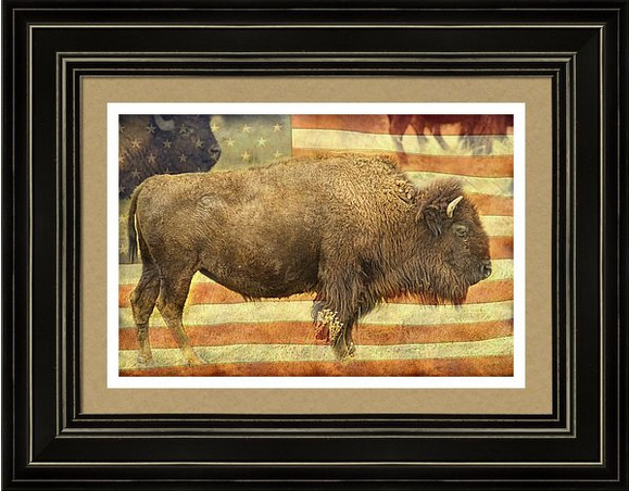 American Buffalo Framed Art Prints