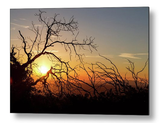 Forest Branches In The Sunset Light Metal Art Print