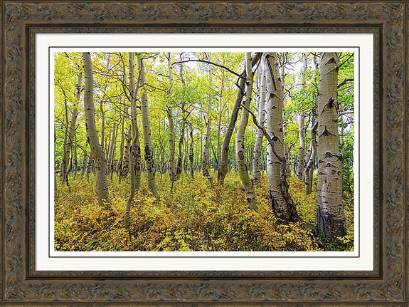 Golden Forest Bed Custom Framed Art Print