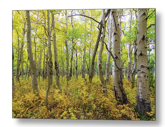 Golden Forest Bed Metal Art Print