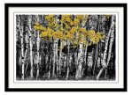 Aspen Touch Of Orange Framed Print