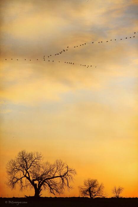 Three Trees Peace and Harmony Birds in V