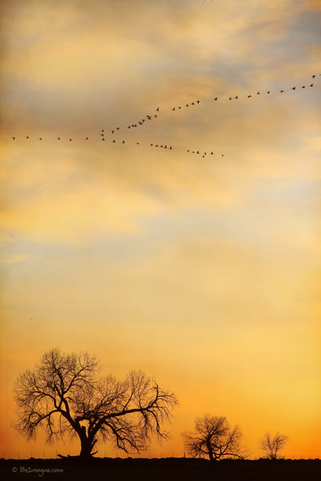 Three Trees Peace and Harmony Birds in V Art Prints