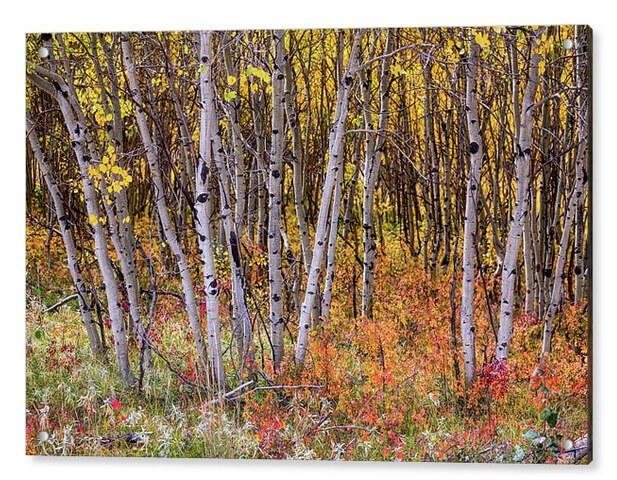 Colorful Woods Wonderland Acrylic Nature Art