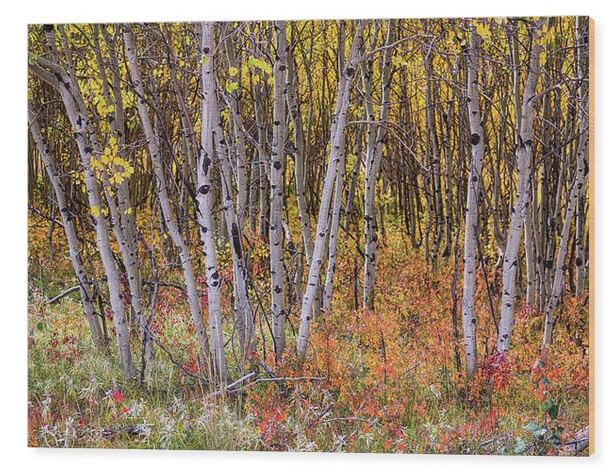 Wonderful Woods Wonderland Wood Print